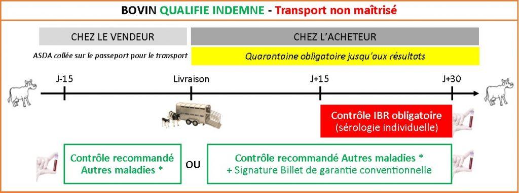 Bovin Qualifié Indemne Transport Non Maîtrisé