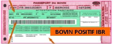 IBR Carte Verte Bovin Positif